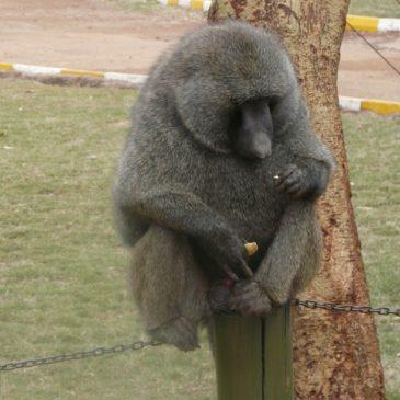 Национален парк Найроби, Кения (Част 1)