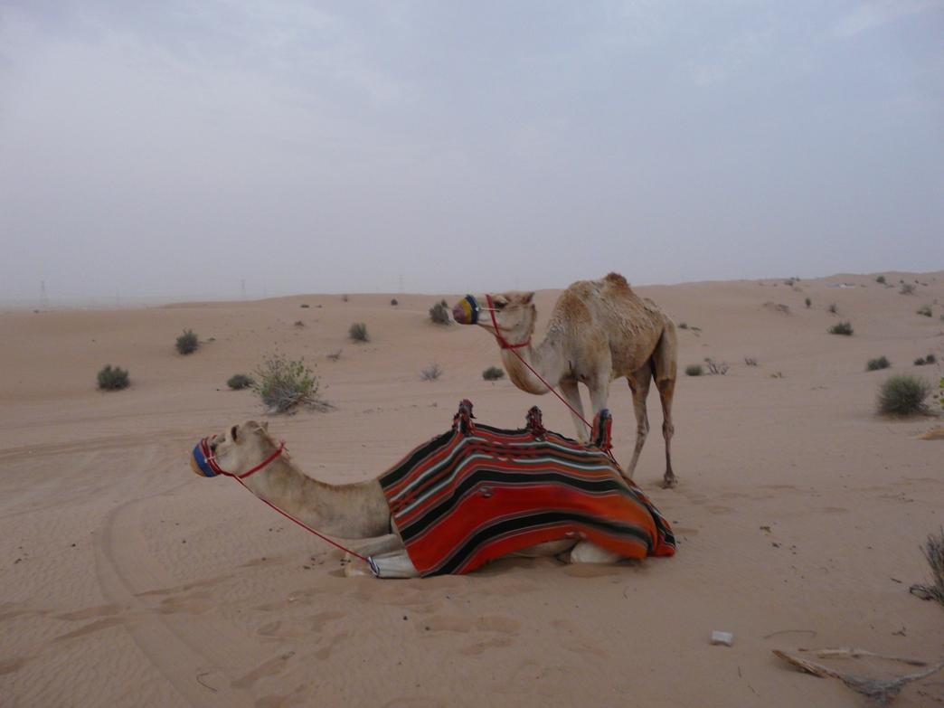 Снимка 4, Изгрев в пустинята, Дубай