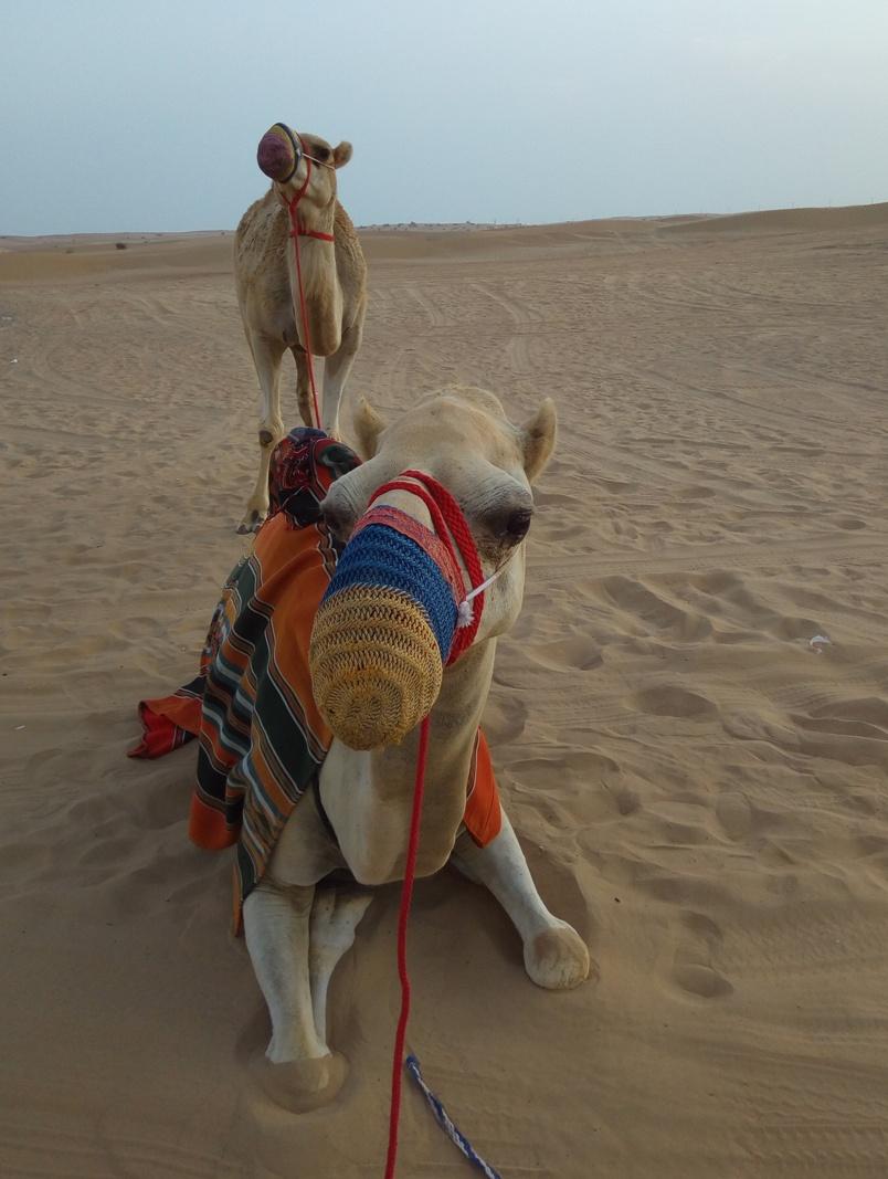 Снимка 6, Изгрев в пустинята, Дубай