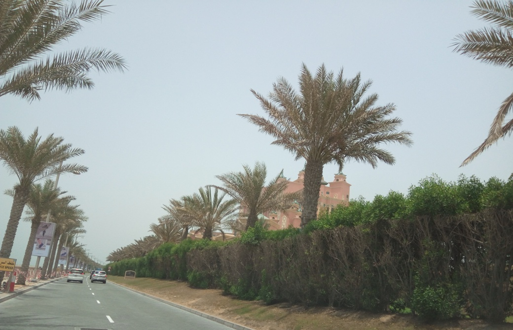 Снимка 6, The Palm Jumeirah, Дубай