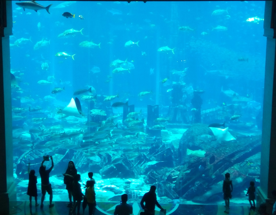 Снимка 8, хотел Atlantis de Palm, Дубай