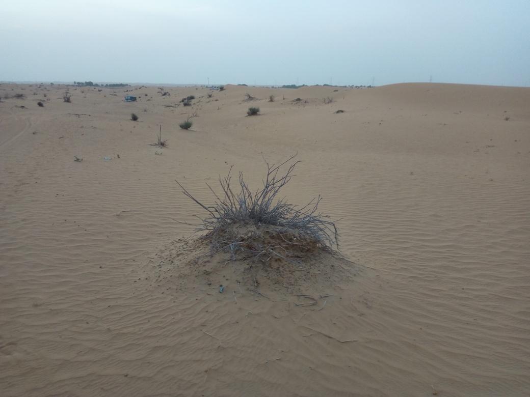 Снимка 1, Изгрев в пустинята, Дубай