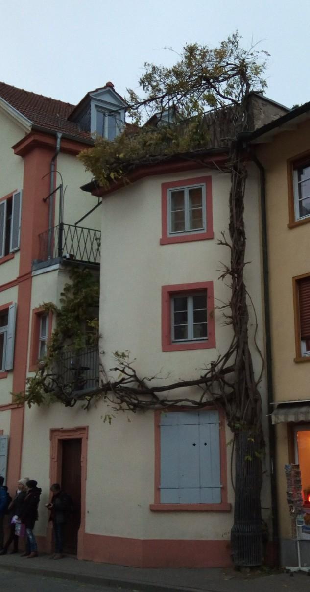 Снимка 19, Хайделберг, Германия
