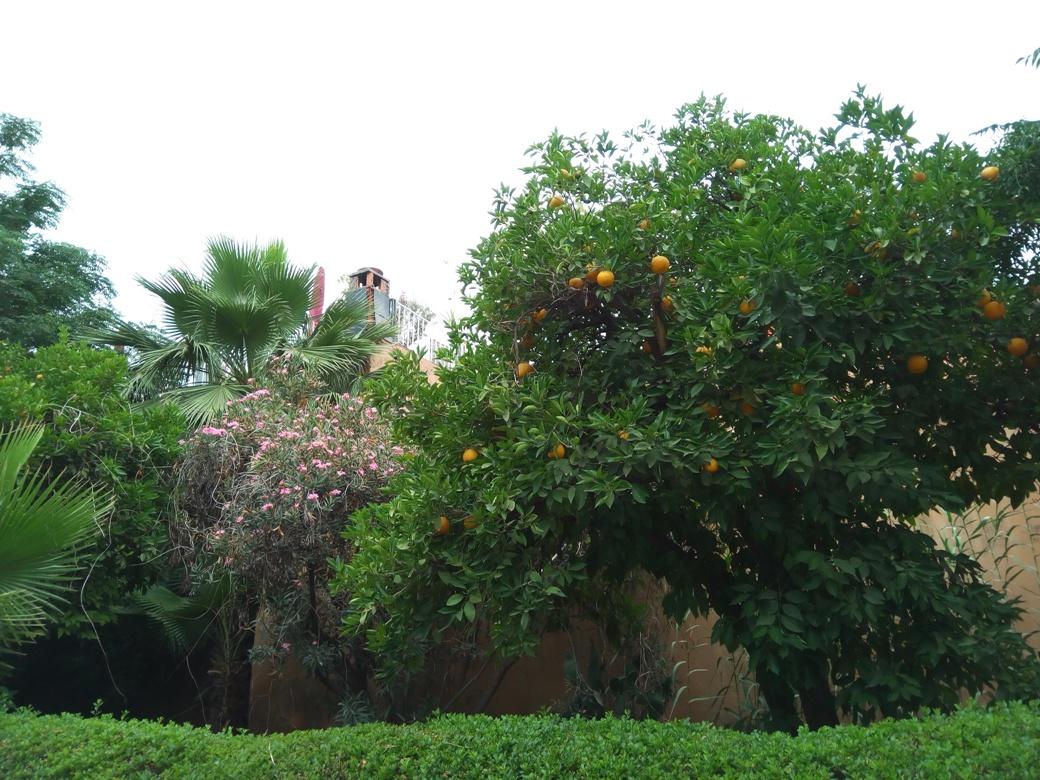 Маракеш, Мароко, Снимка 38