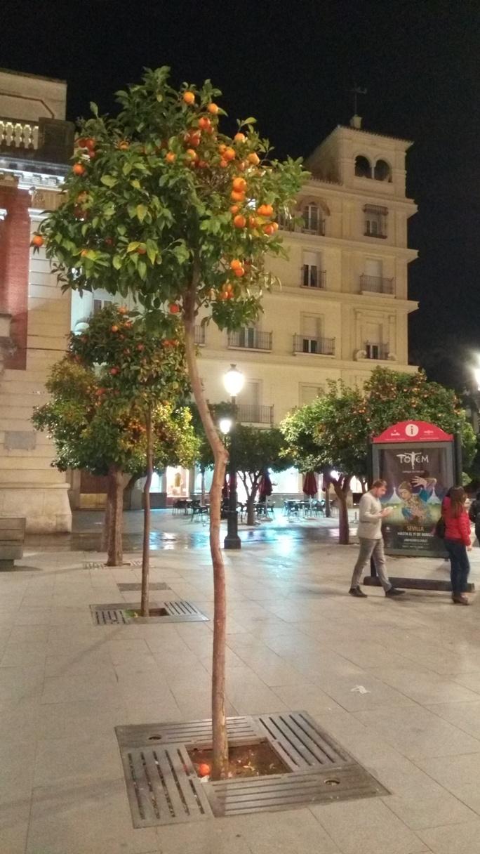 Снимка 28, Севиля, Испания