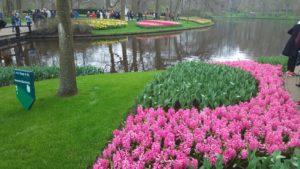 Снимка 45, Кукенхоф, Холандия