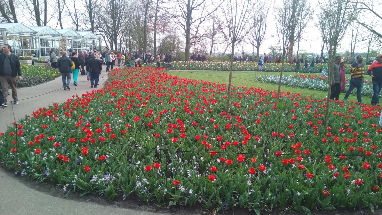 Снимка 8, Кукенхоф, Холандия