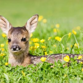 6 от най-невероятните пролетни чудеса по света