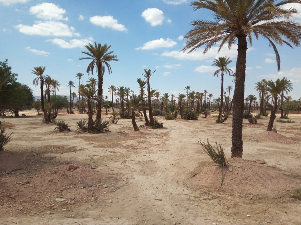 Разходка с камила, Маракеш, Мароко, picture 5