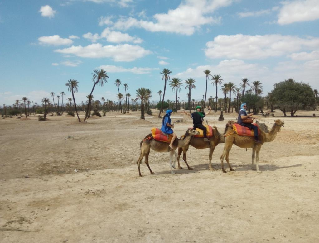 Разходка с камила, Маракеш, Мароко, picture 6