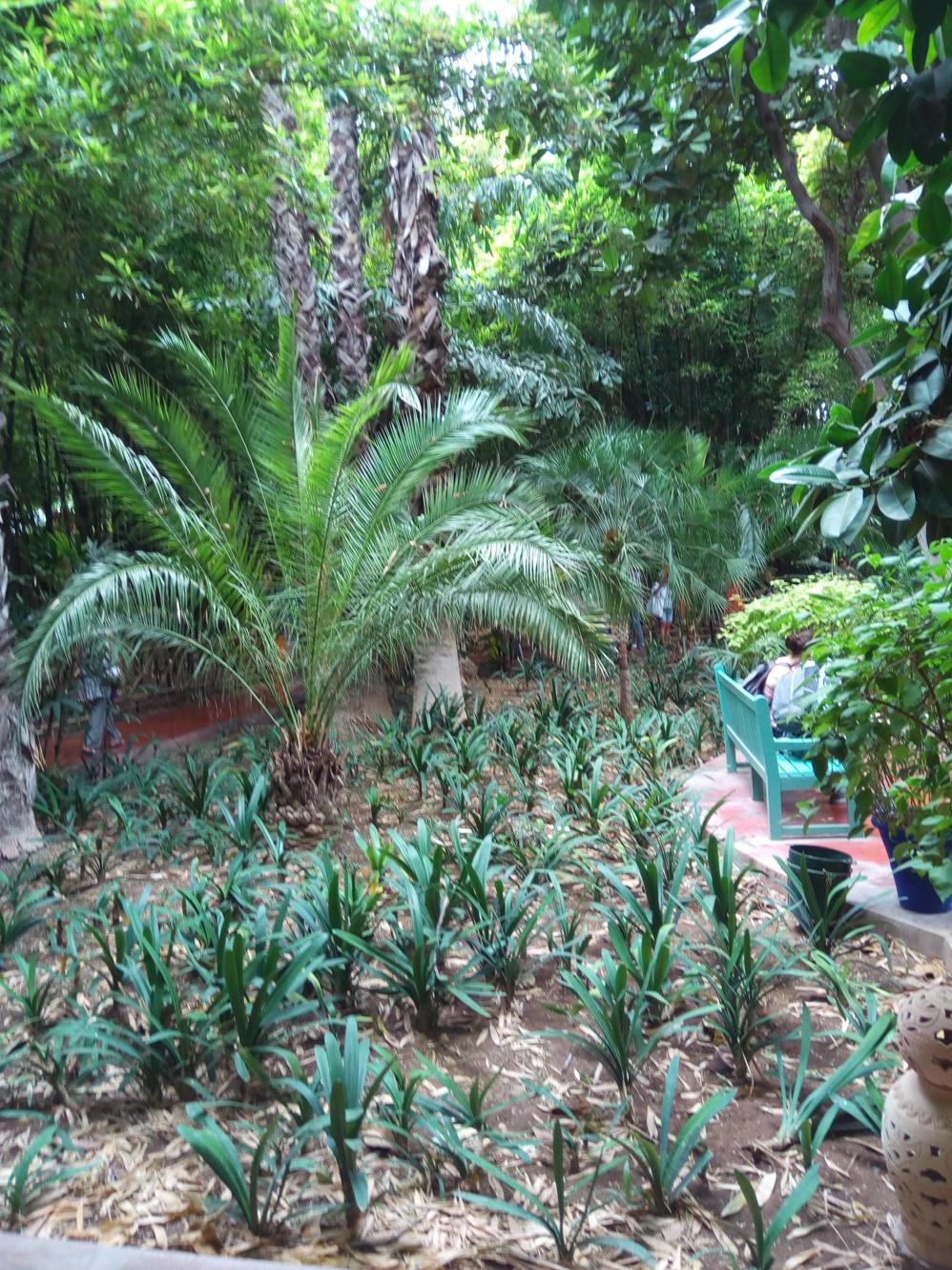 Градината на Ив Сен – Лоран, Маракеш, Мароко, picture 10
