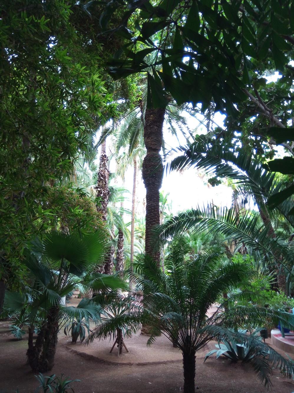 Градината на Ив Сен – Лоран, Маракеш, Мароко, picture 12