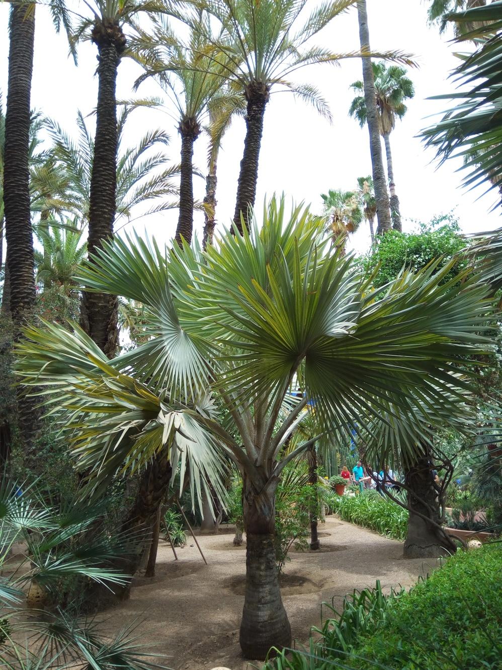 Градината на Ив Сен – Лоран, Маракеш, Мароко, picture 13