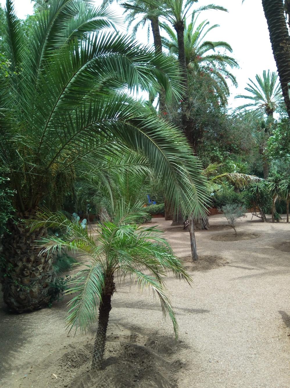 Градината на Ив Сен – Лоран, Маракеш, Мароко, picture 14
