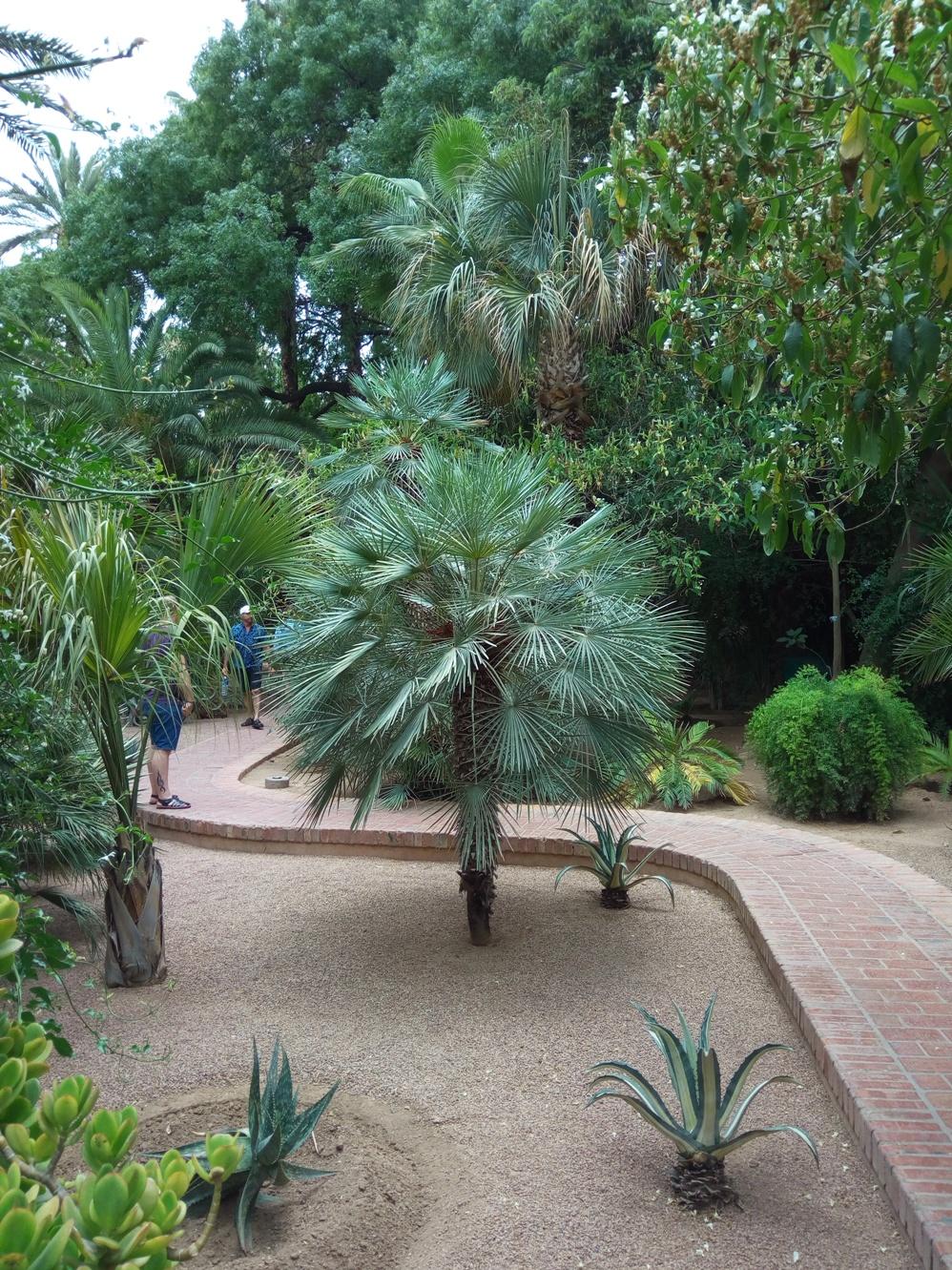 Градината на Ив Сен – Лоран, Маракеш, Мароко, picture 19