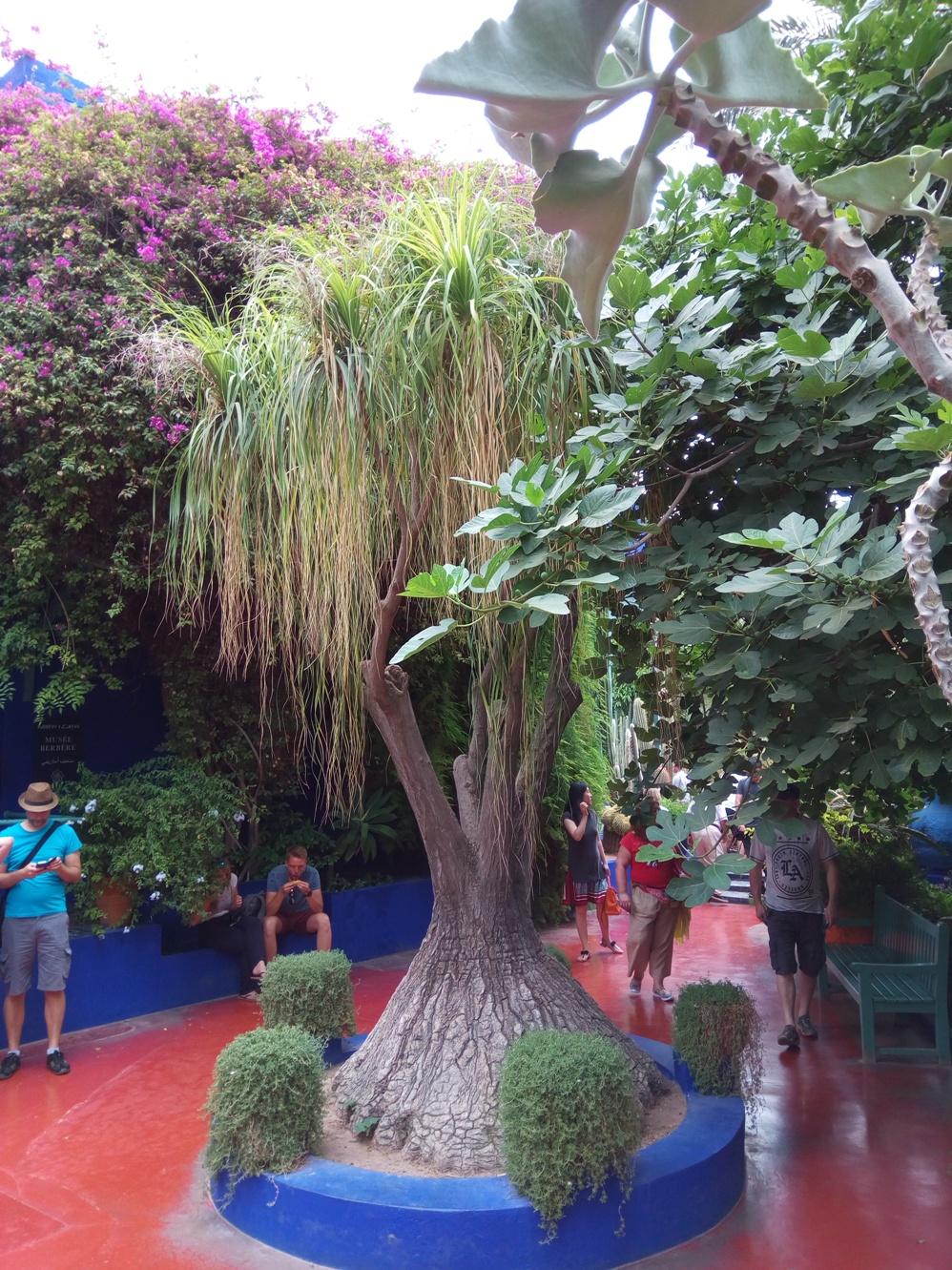 Градината на Ив Сен – Лоран, Маракеш, Мароко, picture 23