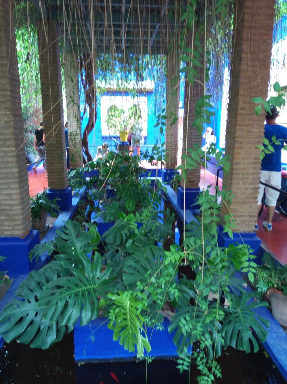 Градината на Ив Сен – Лоран, Маракеш, Мароко, picture 24