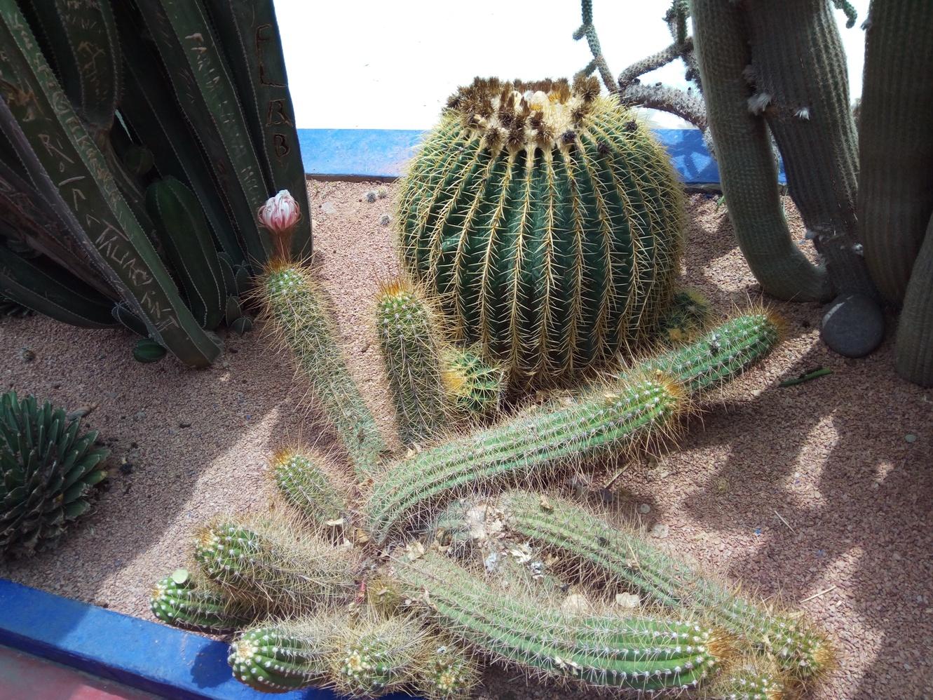 Градината на Ив Сен – Лоран, Маракеш, Мароко, picture 26