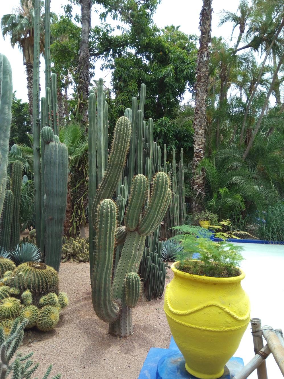 Градината на Ив Сен – Лоран, Маракеш, Мароко, picture 27