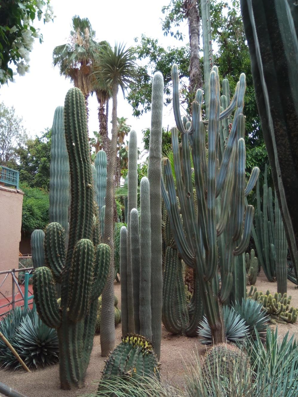 Градината на Ив Сен – Лоран, Маракеш, Мароко, picture 28