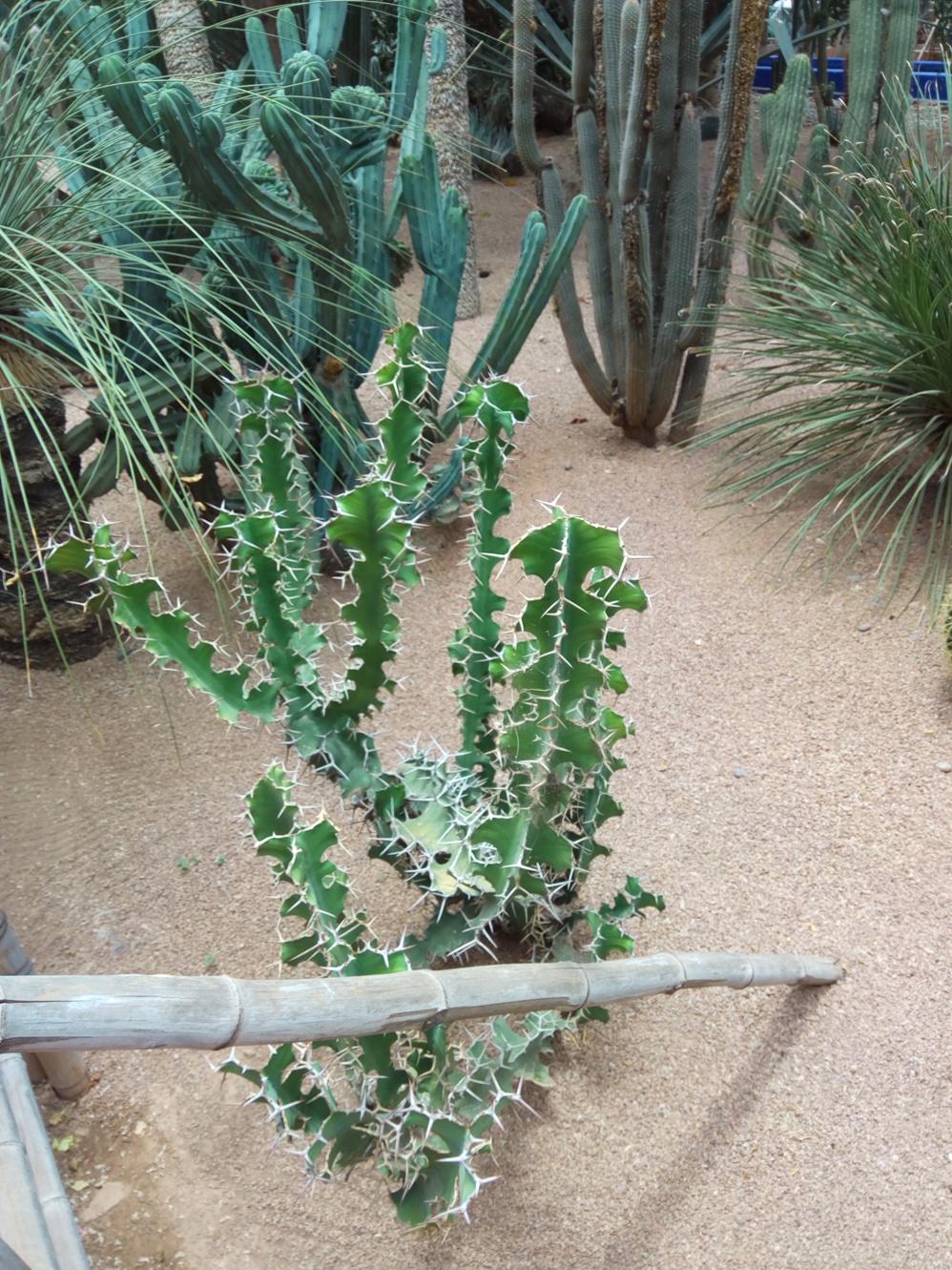 Градината на Ив Сен – Лоран, Маракеш, Мароко, picture 29