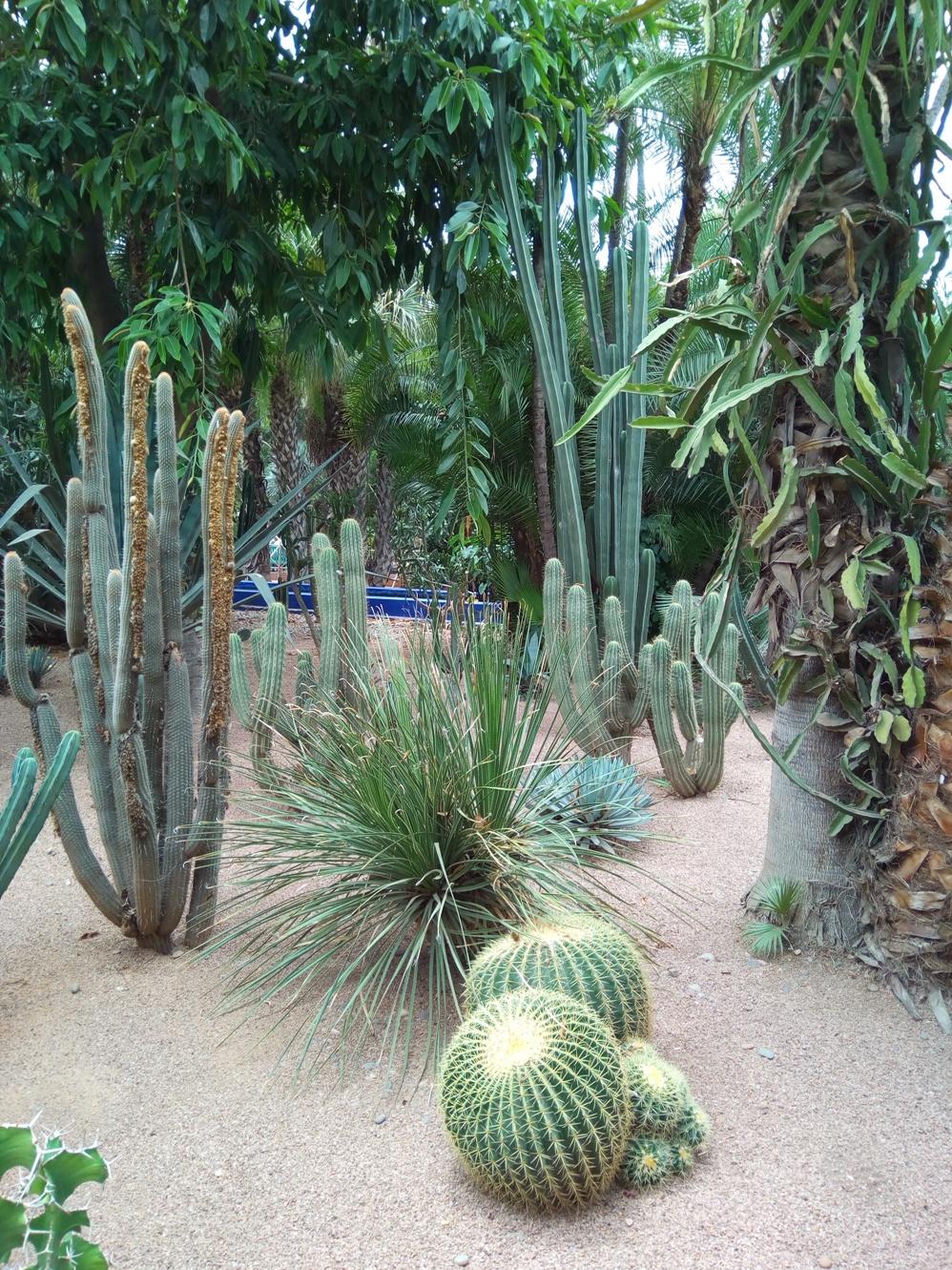 Градината на Ив Сен – Лоран, Маракеш, Мароко, picture 30