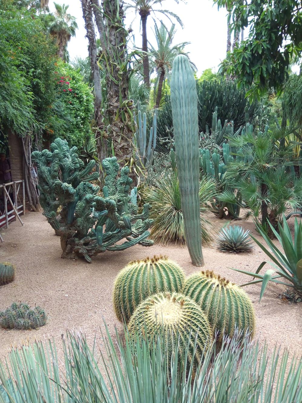 Градината на Ив Сен – Лоран, Маракеш, Мароко, picture 31