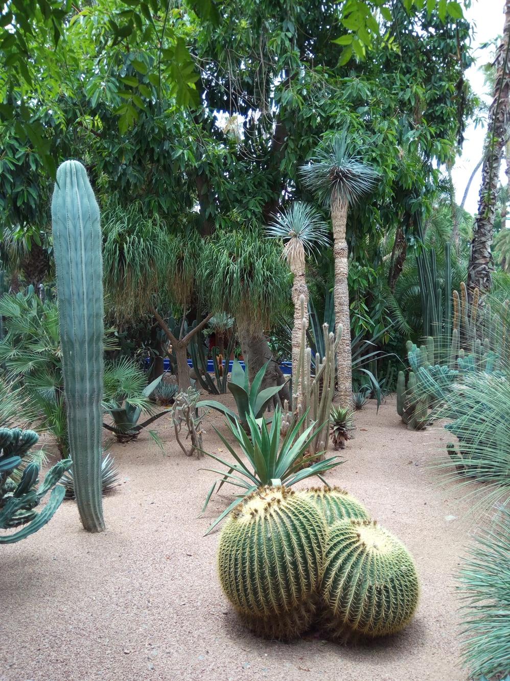 Градината на Ив Сен – Лоран, Маракеш, Мароко, picture 32