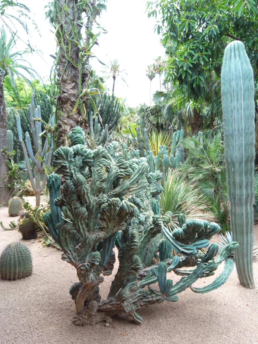 Градината на Ив Сен – Лоран, Маракеш, Мароко, picture 33