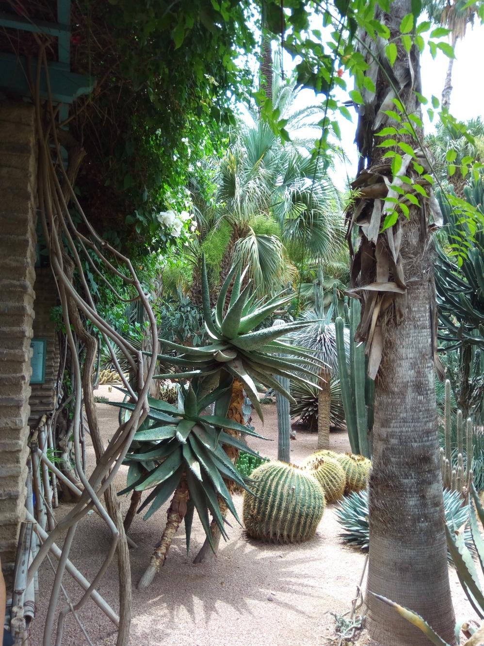 Градината на Ив Сен – Лоран, Маракеш, Мароко, picture 34