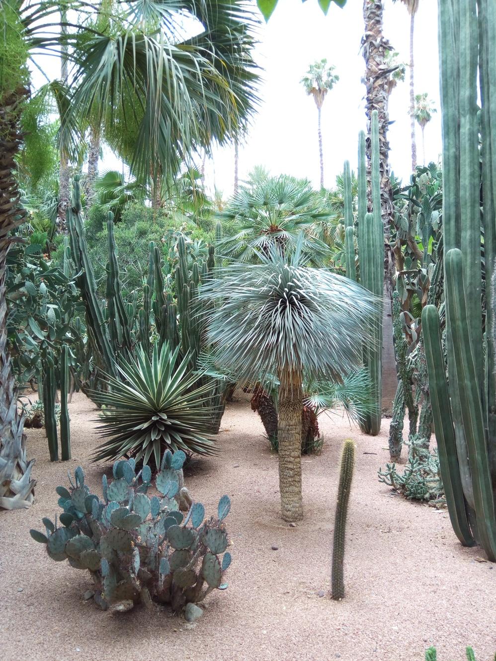 Градината на Ив Сен – Лоран, Маракеш, Мароко, picture 36