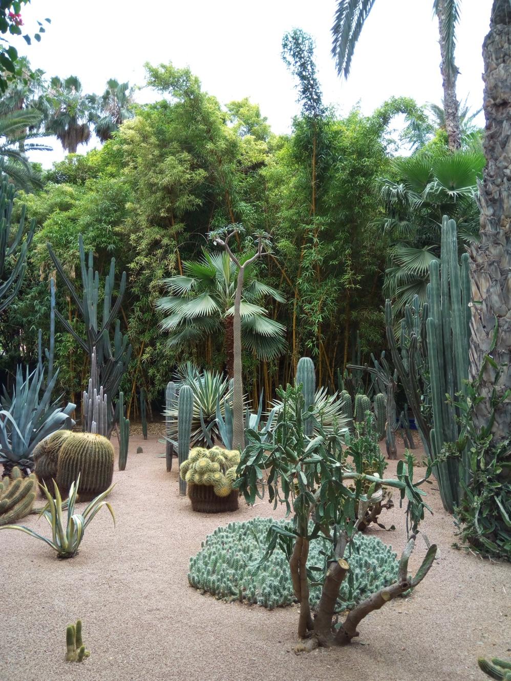 Градината на Ив Сен – Лоран, Маракеш, Мароко, picture 38