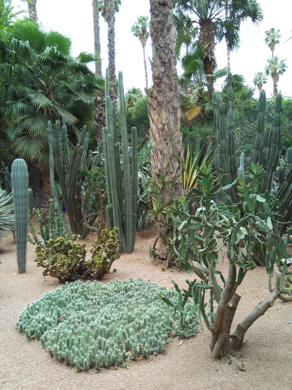 Градината на Ив Сен – Лоран, Маракеш, Мароко, picture 39