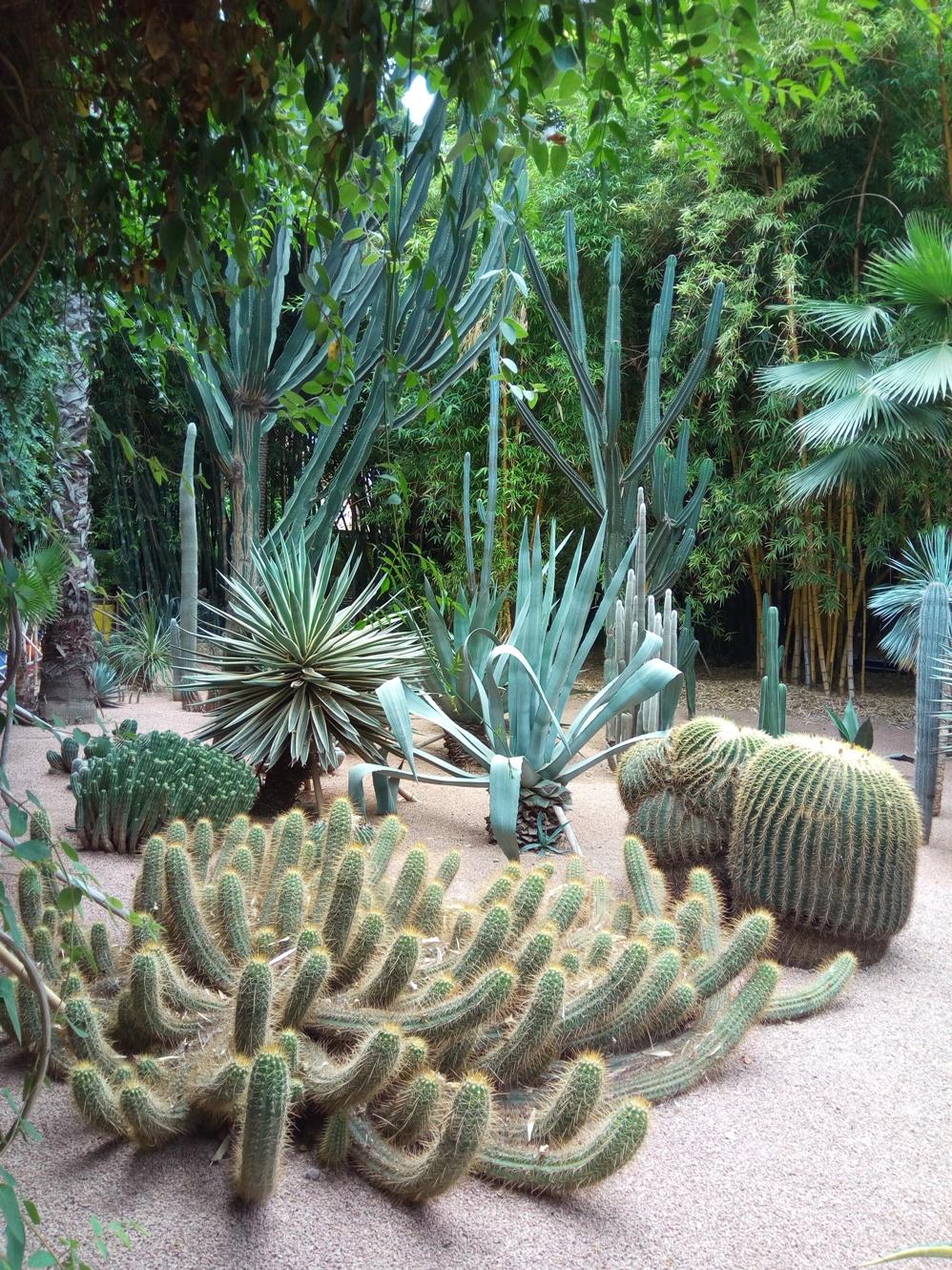 Градината на Ив Сен – Лоран, Маракеш, Мароко, picture 40