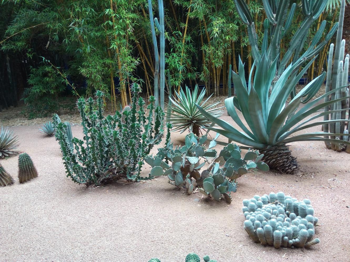 Градината на Ив Сен – Лоран, Маракеш, Мароко, picture 41
