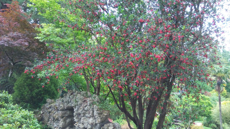 Дърво до оградата на Японската градина в Powerscourt Gardens, Ireland