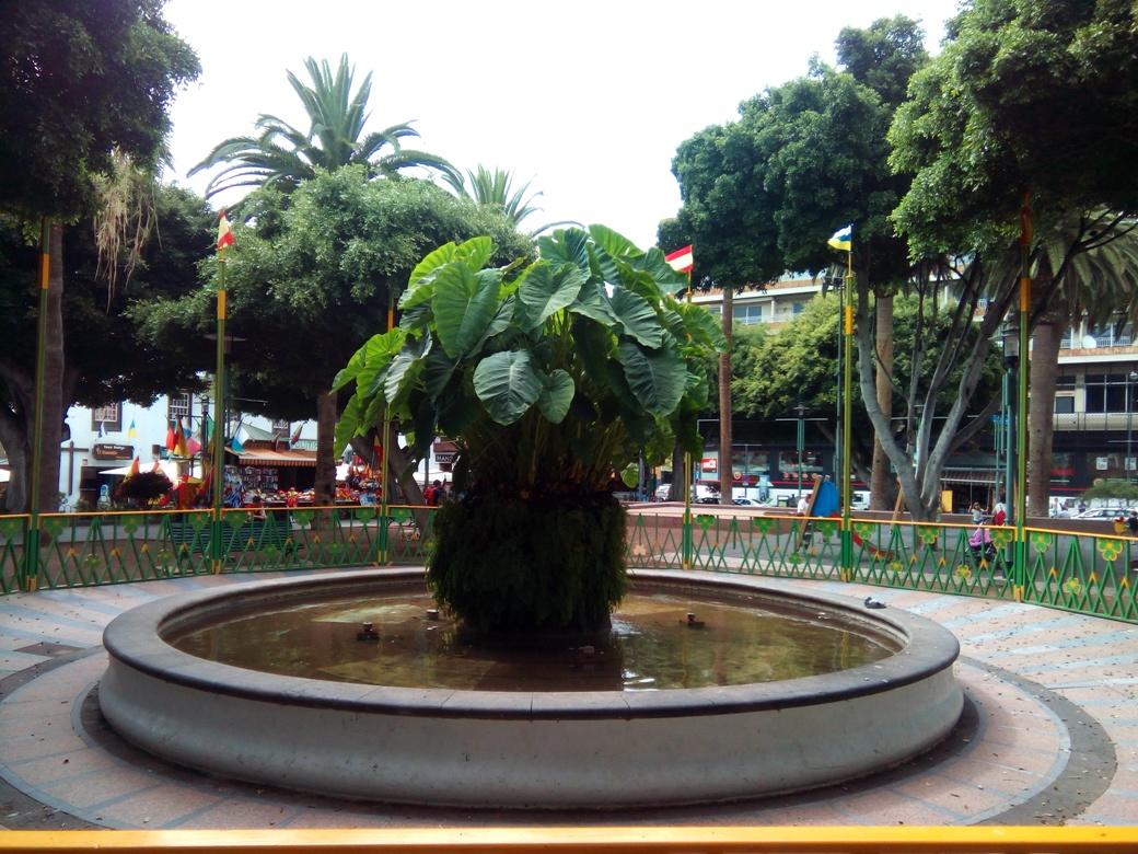 Снимка 8, Пуерто де ла Крус, Тенерифе