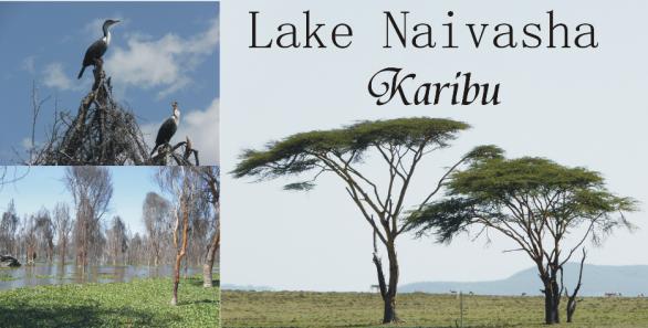 Езерото Найваша, Кения